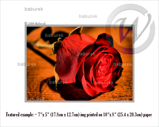 HDR Red rose
